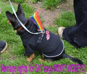 Gay dog1